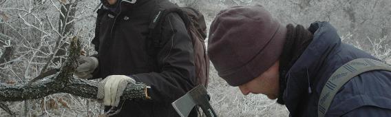 Téli gyűjtés a Nagy-Kevélyen, 2008 (Németh Tamás. Kotán Attila)